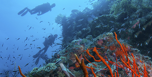 Sites such as Turkey Beach allow divers to follow a multi-level dive plan of 70 minutes or more.