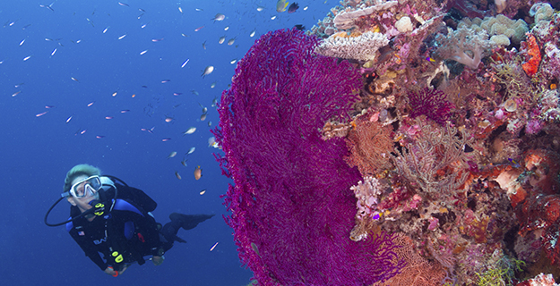 Drifting along the wall of Wakatobi's House Reef reveals one colorful surprise after another.