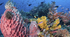 Wakatobi's Ancient Reef Dwellers