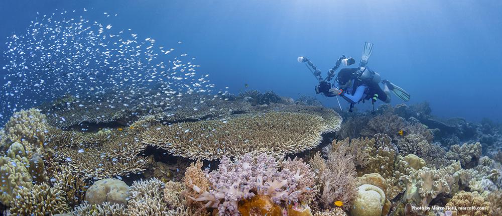 Protecting Wakatobi's Coral Kingdom