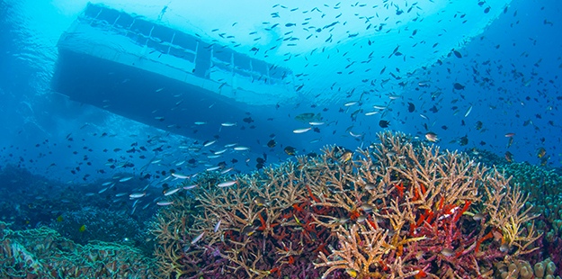 At sites like Zoo the shallow parts of the reef is rich in fish life, and shelters numerous creatures for snorkelers to find.
