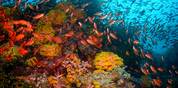 A few yards of finning from the Wakatobi jetty and you arrive at the drop off whe you'll get in close to a plethora of marine life without errant fin contact.