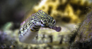 Wakatobi's Macro Magic
