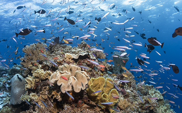Guests of Wakatobi have exclusive access to a private marine preserve, where pristine reefs nurture the world's highest level of marine biodiversity.