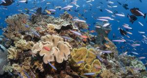 Living Reefs