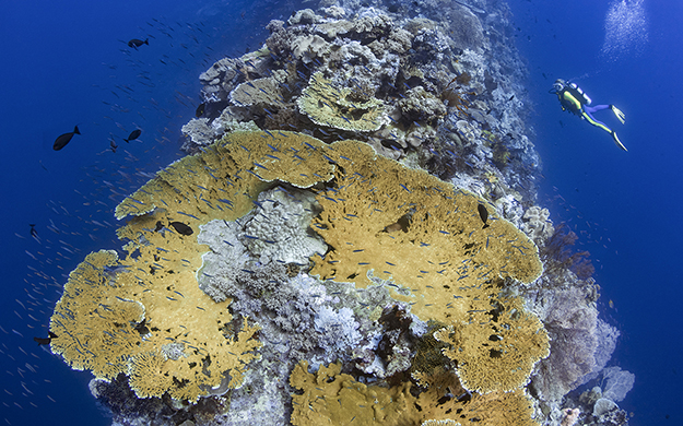 On the way to and from Wakatobi Resort, Pelagian stops at sites on the outer edge of day-boat range, such as the knife-edged seamounts of Blade.