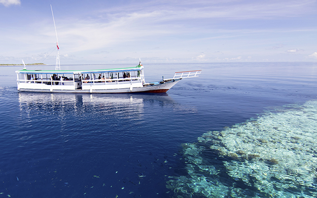 Thanks to a unique underwater topography where reefs rise from the depths to within a meter or two from the surface, many of Wakatobi's 40-plus dive sites are beginner friendly.