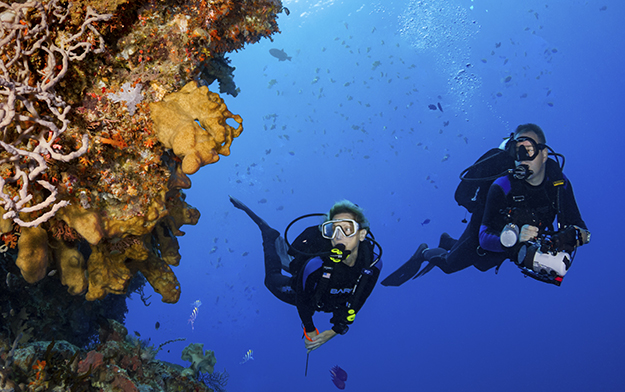 Many sites close to Wakatobi Resort feature underwater cliffs that butt up to beginner-friendly shallows, creating an easy opportunity to experience the visual thrills of wall diving. Photo by Walt Stearns