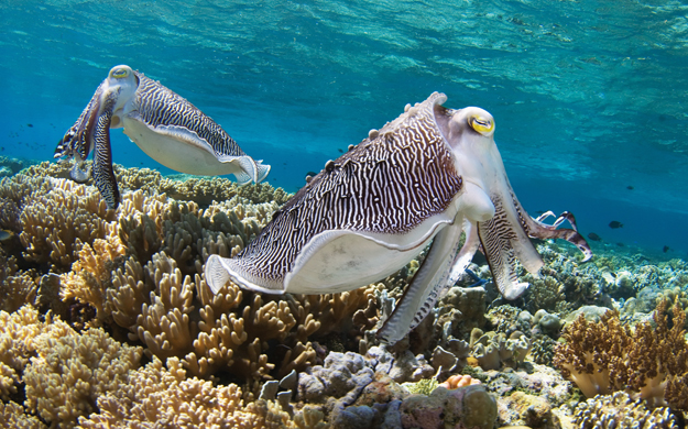A swim around the resort jetty will reveal a multitude of marine life, including cuttlefish, which can even show up in pairs.