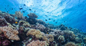 Memories from a Snorkeler